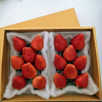✢ゴールドのギフトボックス✢ 群馬県産『やよいひめ』 350g×2パック 果物(いちご) 通販