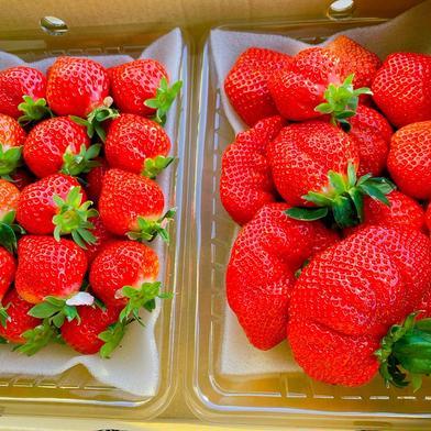 池上農園のたっぷりパック 1kg 果物(いちご) 通販