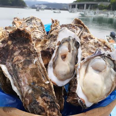 今が旬!三陸直送!殻付き牡蠣20個生食用L.Mサイズ混合生食用 宮城県 通販