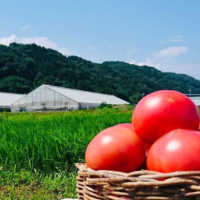 長野の自然が育てた恵『 桃太郎トマト&中玉トマトフルティカ食べ比べセット』2キロ箱 2キロ箱でのお届け。桃太郎トマトMサイズ6玉&中玉トマトフルティカ約900gのセット 野菜(トマト) 通販