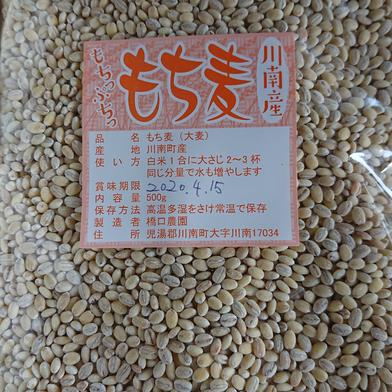 もち麦 500g×3袋 宮崎県 通販