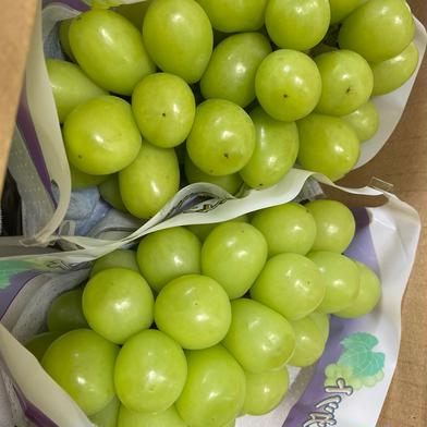 シャインマスカット 2kg 果物(ぶどう) 通販