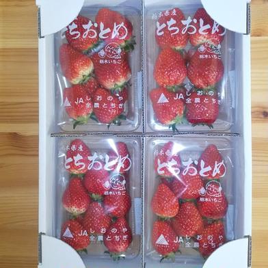 とちおとめ  280g×4パック 280g×4パック 果物(いちご) 通販