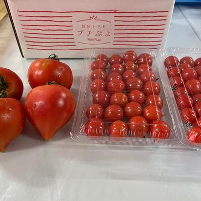 トマトの王様セット🍅プチぷよとルネッサンス プチぷよ2パック(約500g)ルネッサンス4個(1個150g前後) 野菜(トマト) 通販