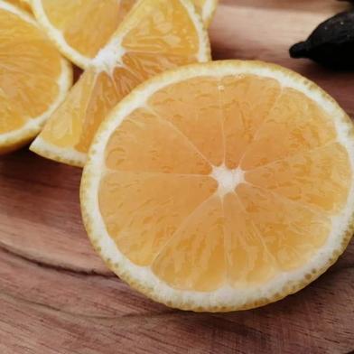 訳ありパインみかん 3箱セット 6キロ 果物(柑橘類) 通販