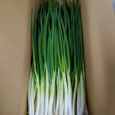 今が旬 岩子島のわけぎ 1Kg 1kg 果物や野菜などの宅配食材通販産地直送アウル