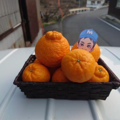 不知火(デコポン) 箱込み 5キロ 果物(柑橘類) 通販