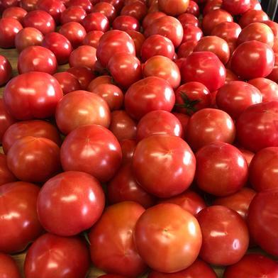石井農園完熟トマト【4kg箱満杯詰め】 3.8 野菜(トマト) 通販