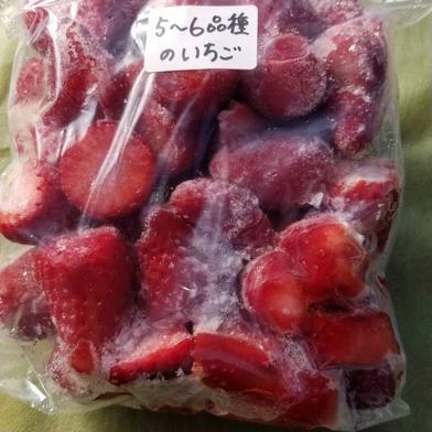 5〜6品種の冷凍ブレンドいちご 2キロ 果物(いちご) 通販