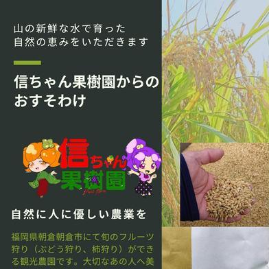 ヌカ切れ抜群クリーン白米 果樹農家が作ったお米   ひのひかり2kg 2キロ 福岡県 通販