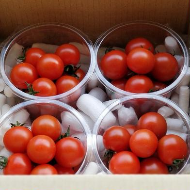 食べてみないと分からない!《お試し♪》あま旨とまと【暁】500g 500g(125g入りパック×4パック) 野菜(トマト) 通販