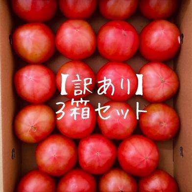 【訳あり】赤採りトマト3箱(4kg箱満杯×3) 約12kg(4kg箱満杯×3) くるるんトマトファーム龍農園