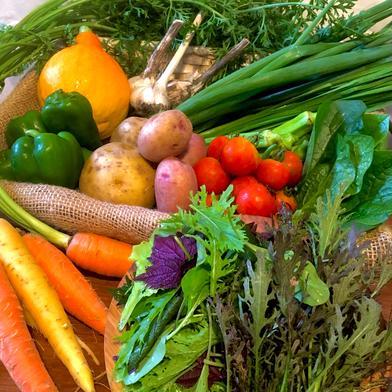 有機ファームえんのおまかせ野菜セット 70サイズ キーワード: キャベツ 通販