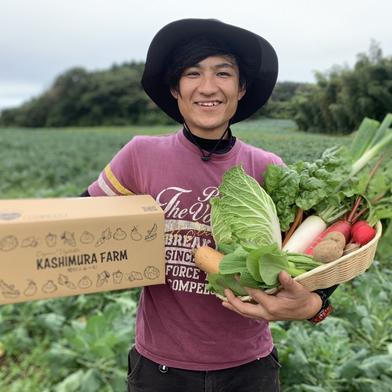 樫村ふぁーむの旬の野菜お任せBOX 6〜8品目 キーワード: キャベツ 通販