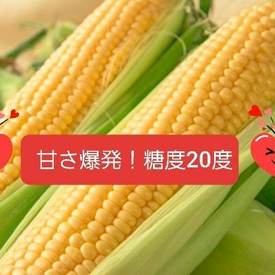 【お試し】8月10日から発送 奇跡のとうもろこし4本 1.7kg 野菜(とうもろこし) 通販