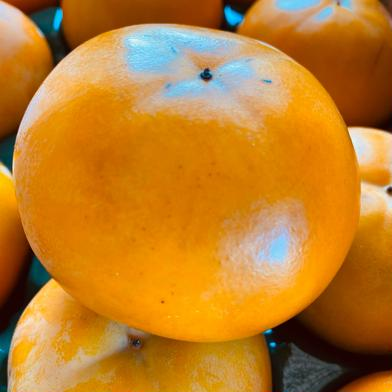 ご家庭用富有柿Mサイズ20個 4kg 果物(柿) 通販