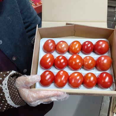宮島農園フルーツトマト 800g 野菜(トマト) 通販