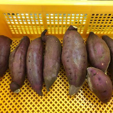 千葉県佐倉市産のさつまいも(シルクスイート) 3㎏ 野菜(さつまいも) 通販