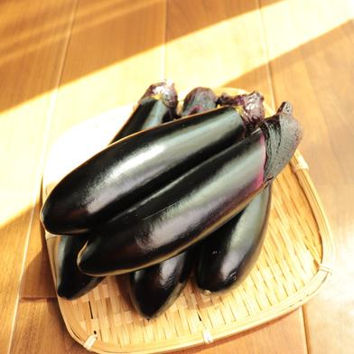 お得盛り盛り! トロ~リ長ナス☆ 約4kg (13-16本) 野菜(茄子) 通販