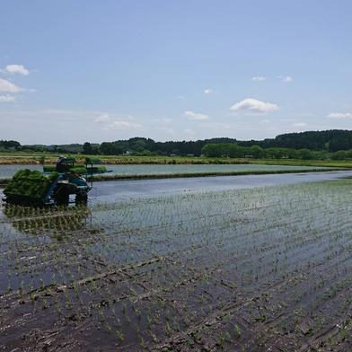【お買い得用】青森県産まっしぐら玄米 23kg 23kg 青森県 通販