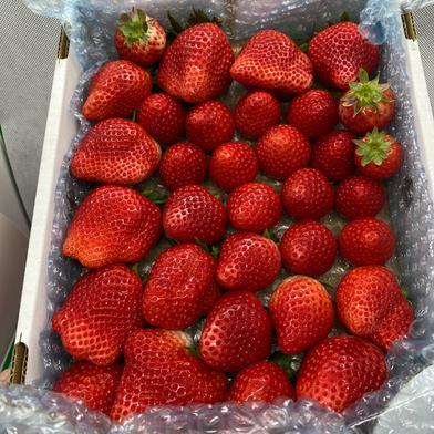 規格外いちごさん4kg(箱梱包重さ込み)潰れが気にならない方限定♡ 4kg(箱梱包重さ込み) 果物(いちご) 通販