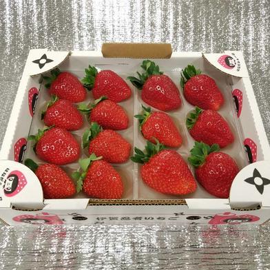 『プレミアムモカベリー 』 苺 イチゴ ※時間指定は可能です。 一箱 苺のみ約540g【約270g×2パック(1パック6粒or8粒)】化粧箱入り 果物(いちご) 通販