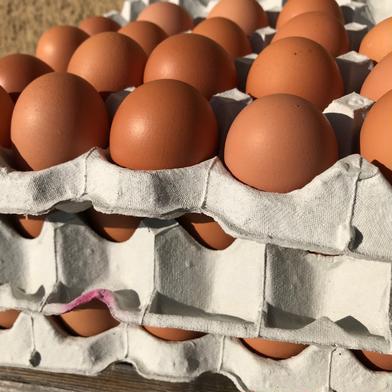 【赤たまご160個】陶芸の里、益子でうまれた赤たまご160個 160個(40個入り紙トレイで4段重ね)重量目安9.2-10.2kg 卵 通販
