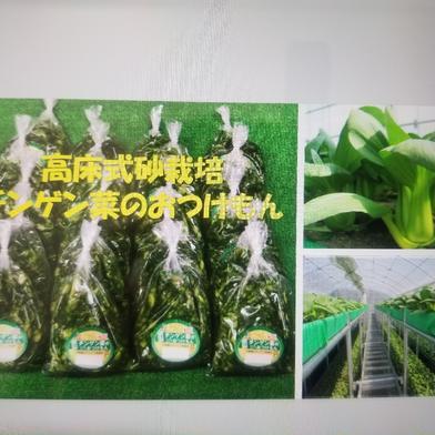 チンゲン菜おつけもん★ 10袋 加工品(漬物) 通販