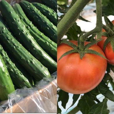 中サイズ キュリトマセット 4kg-5kg 食材ジャンル: 野菜 > セット・詰め合わせ 通販