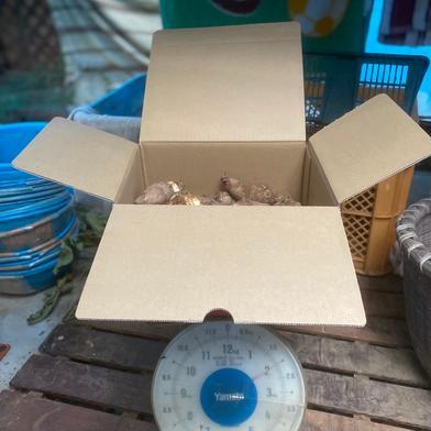 小粒な里芋詰め合わせ 2kg 2.0kg 神奈川県 通販