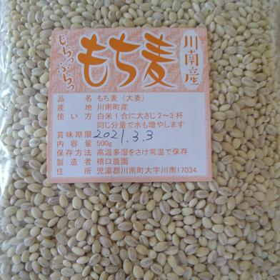 令和2年産もち麦500g×5袋 500g×5袋 宮崎県 通販