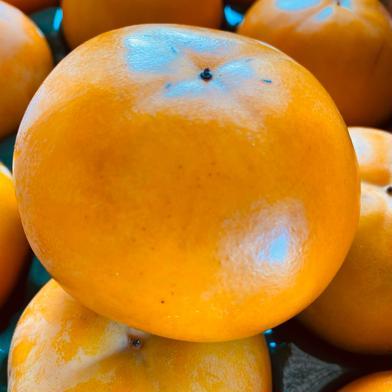ご家庭用 富有柿Lサイズ  2.5kg 果物(柿) 通販