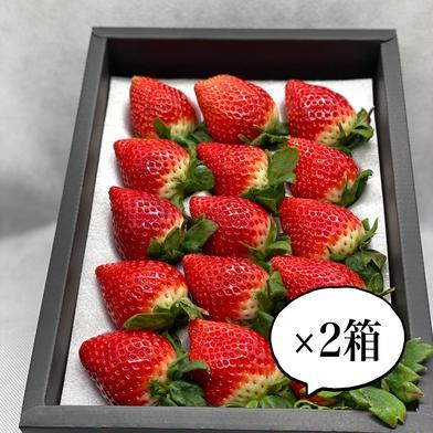 大粒食べ比べギフト2箱(いちごさん1箱、さがほのか1箱) 2箱(約900g) 佐賀県 通販