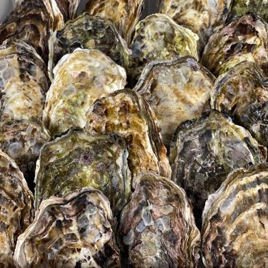 殻付き50個【4月から加熱用】 殻付き50個 果物や野菜などの宅配食材通販産地直送アウル