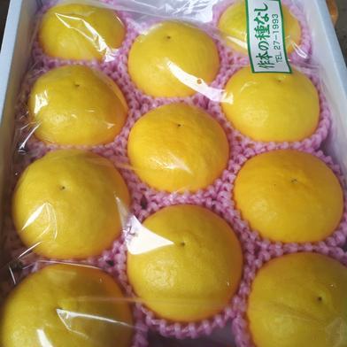 作本柑橘園の日向夏(たねなし) 2.5キロ 果物(柑橘類) 通販