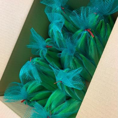 新鮮!香川県産ハウスオクラ 10本×10袋【SAKAVEGE】さかした農園 10本×10袋 野菜(オクラ) 通販