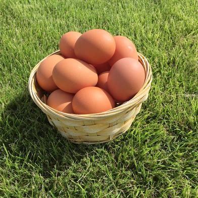 赤たまご6個入り紙パック✖️12個入りお裾分けセット 重量目安3.6-4.0kg (72個) 卵 通販
