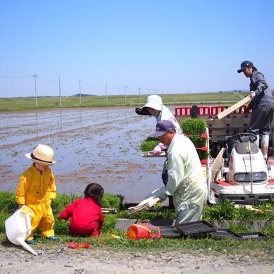 高雄農産の美味しいひとめぼれ 10キロ 宮城県 通販