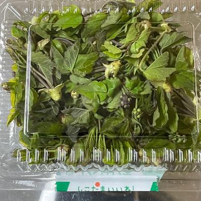 超レア食材 アケビの新芽 200グラム 200グラム 秋田県 通販