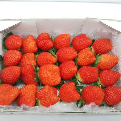 楽しみに待ちたくなる、2つの幸せが入ったイチゴの宝箱!(2品種食べ比べセット) 総重量700g 700g(箱や蓋、緩衝材等の重量込) 果物(いちご) 通販