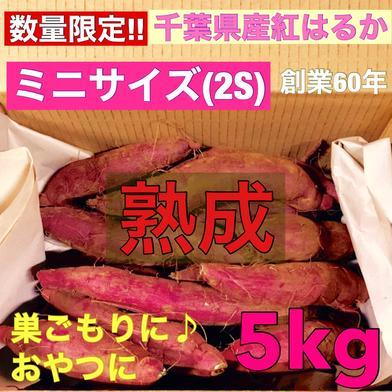 【数量限定】熟成 さつまいも (紅はるか) 2Sサイズ 5kg 土つき 5kg 野菜(さつまいも) 通販