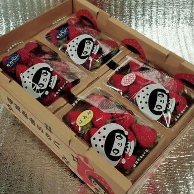 【特価価格】いろいろなサイズ『品種3種類』 苺 イチゴ ※簡易な梱包のため傷む可能性あり 一箱 苺のみ約900g以上【約230g×4パック】 果物や野菜などの宅配食材通販産地直送アウル