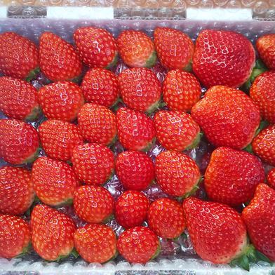 栃木のとちおとめ!よくばり詰めハーフ 1.1kg 果物(いちご) 通販