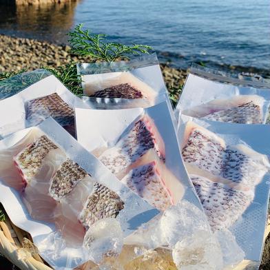 獅子島産真鯛(養殖)切り身 6パック 6パック(約540g) 魚介類(その他魚介) 通販