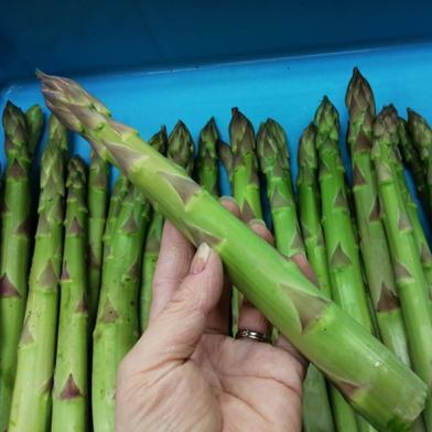 はなまる農園の極上極太アスパラ(さぬきのめざめ)1kg 3Lアスパラ(さぬきのめざめ)1kg 野菜(アスパラガス) 通販