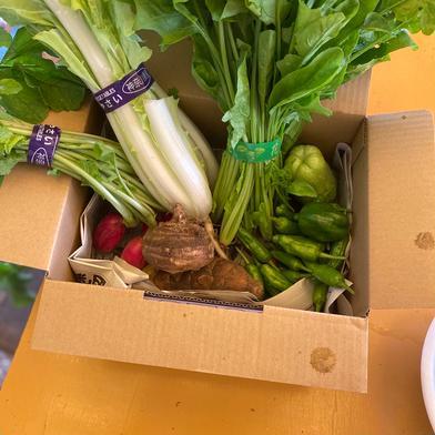 鈴木清友農園 野菜詰め合わせ 60セット 2.0kg 神奈川県 通販