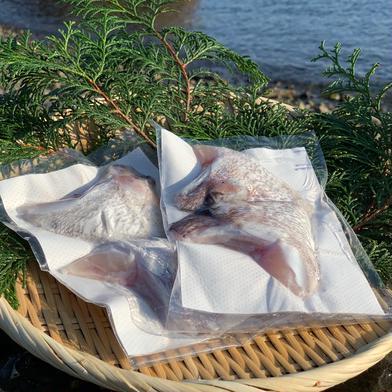 獅子島産真鯛(養殖)カマ 1対×4パック 魚介類(その他魚介) 通販