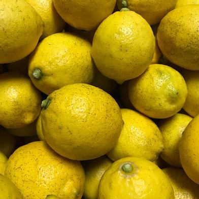 【農薬不使用】瀬戸内産レモン 3kg 3kg 愛媛県 通販