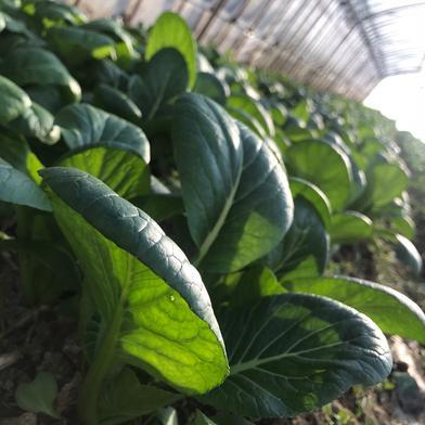 旬の野菜詰め合わせセット 約3kg 福島県 通販