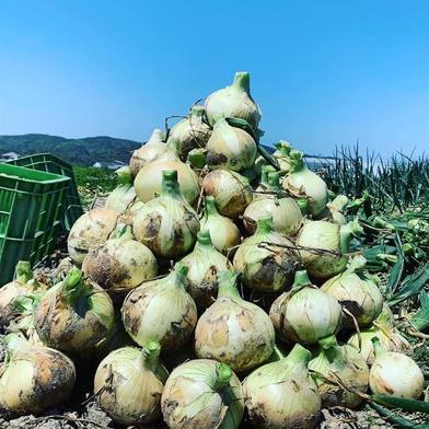 訳あり!福玉 3キロ 3キロ 果物や野菜などの宅配食材通販産地直送アウル